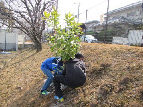 泉北高倉小学校レモン植樹祭