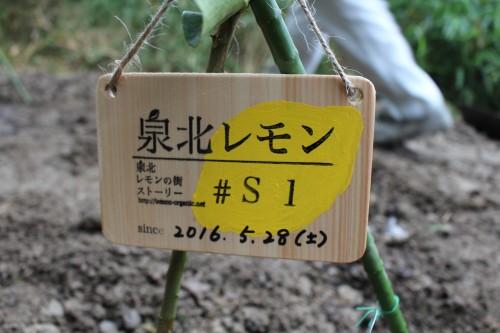 泉北レモンプレートS Ver.3