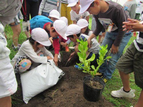 穴を掘って堆肥を混ぜます。