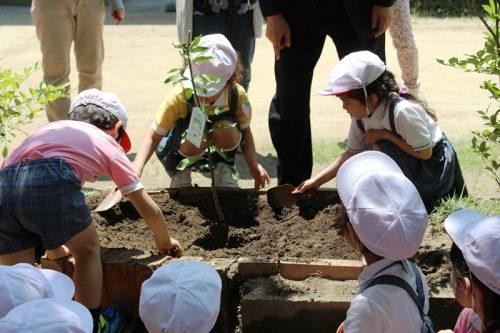 160516槙塚幼稚園植樹祭2
