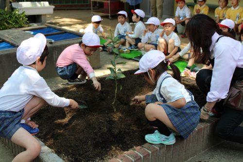 160516槙塚幼稚園植樹祭1