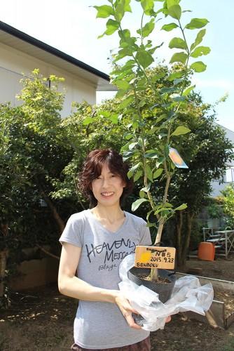 泉北レモンの植樹#N6