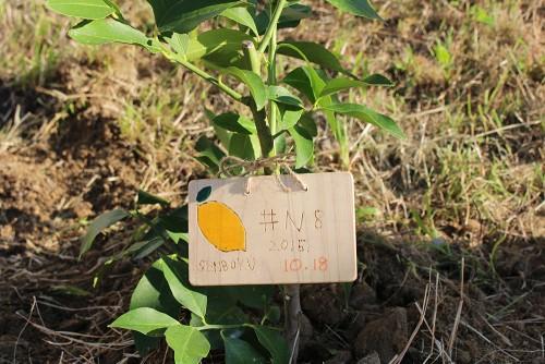 泉北レモンの植樹#N8