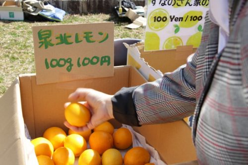 泉北レモンの販売