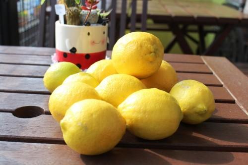 泉北産無農薬レモン