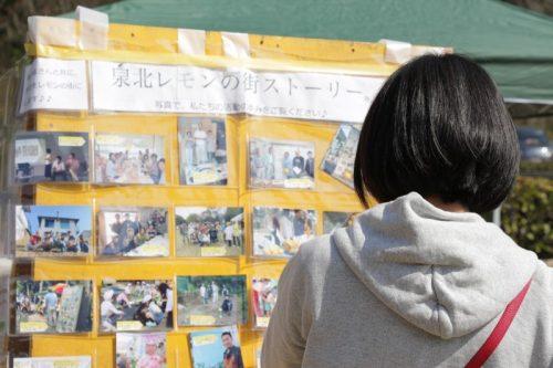写真で見る泉北レモンの街ストーリー