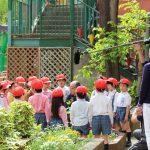 槙塚幼稚園のレモン苗木
