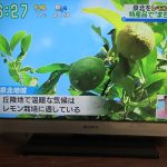 171011泉北レモン・読売テレビ「す・またん」