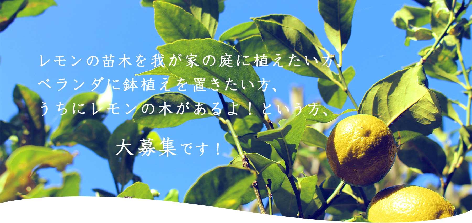 レモンの「輪」に参加する